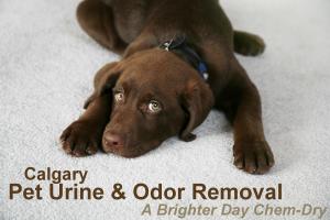 Calgary Pet Urine Removal